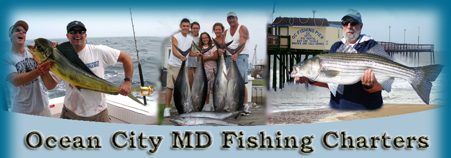 Ocean city maryland fishing articles for Ocean city fishing charters